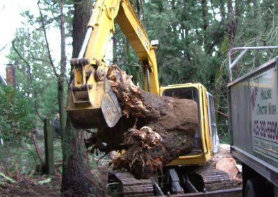 Loading a fallen tree || Cascade Dozing